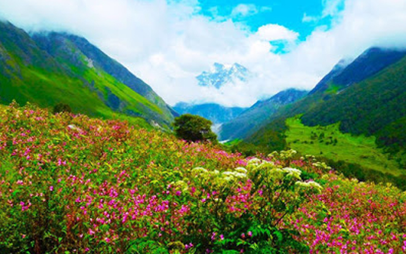 public/images/products/valley-of-flowers-2020.jpg